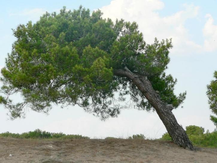 Identifying Dangerous Trees
