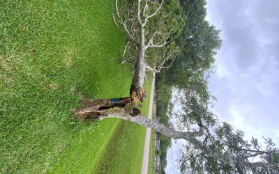 When is it time to remove a tree?